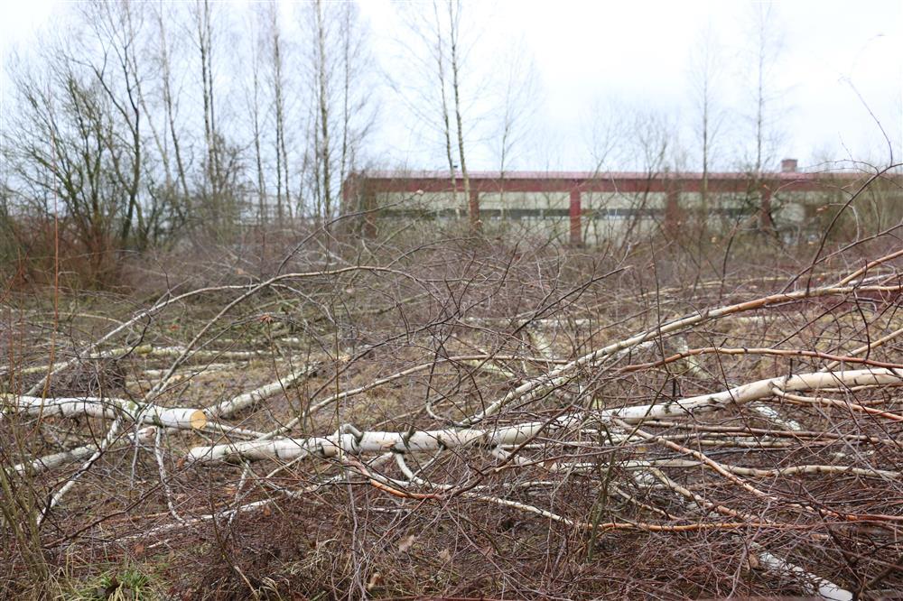 Pradėta tvarkyti Alytaus pramonės parko teritorija