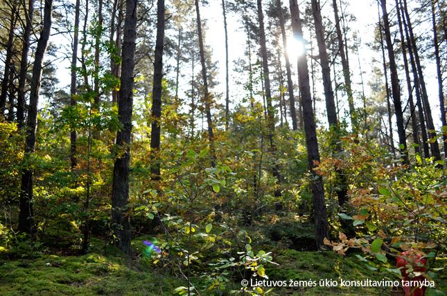Vyks nemokami nuotoliniai mokymai privačių miškų savininkams