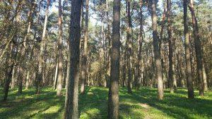 Alytaus ir Lazdijų rajonuose sumažėjo miškų, tačiau miškininkai grėsmės neįžvelgia 1