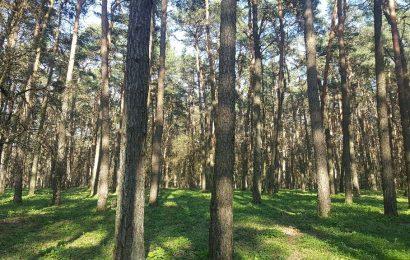 Alytaus ir Lazdijų rajonuose sumažėjo miškų, tačiau miškininkai grėsmės neįžvelgia