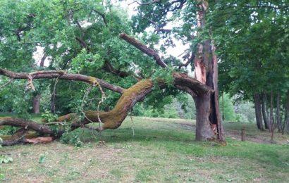 Druskininkuose praūžęs vėjas nulaužė J. Pilsudskio ąžuolo atšaką