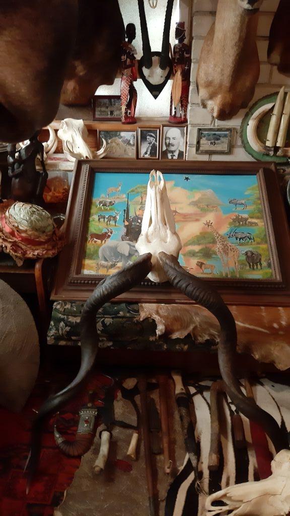 Ragų ieškotojo namuose - įspūdinga trofėjų kolekcija 4