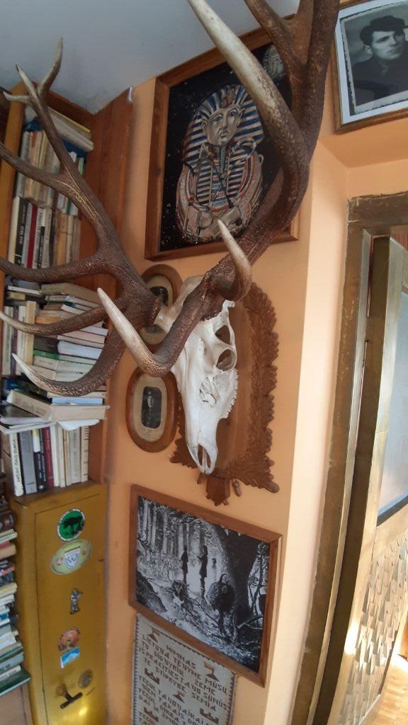 Ragų ieškotojo namuose - įspūdinga trofėjų kolekcija 3