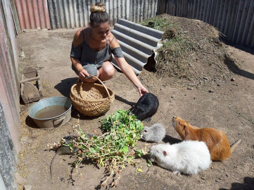 Jauna šeima laimę atrado senelių kaime 4