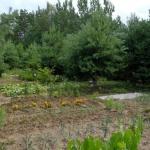 Dėl nelegalių daržų Jaunimo parke - savivaldybės įspėjimas 1