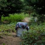 Dėl nelegalių daržų Jaunimo parke - savivaldybės įspėjimas 2