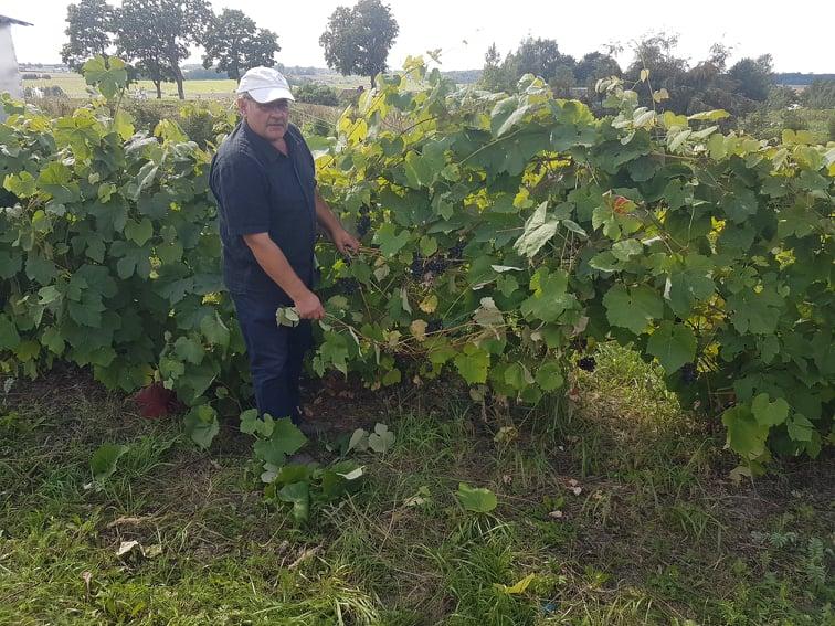 Buvusio pareigūno sode – pasaulinės vynuogių, riešutų kolekcijos ir egzotika 1