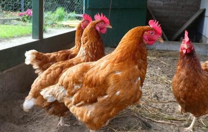 Gaisro padariniai: gyventojams gali tekti išskersti gyvulius