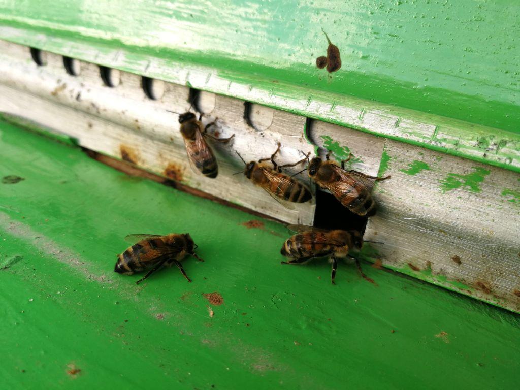 Gamtos kataklizmai Dzūkijoje: klykauja gervės, perus augina bitės 5
