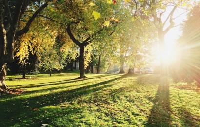 Priimti ribojimai parkų ir kitų viešų vietų lankytojams
