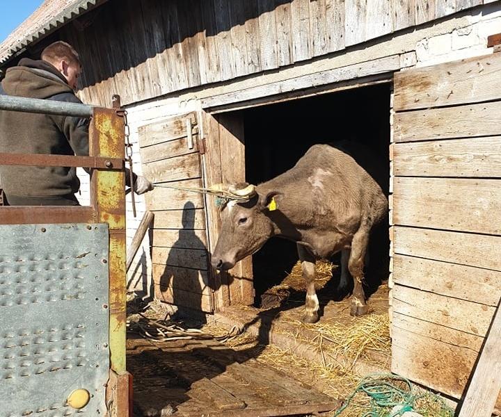 Alytaus rajone pradėtas per gaisrą dioksinais užterštų gyvulių utilizavimas