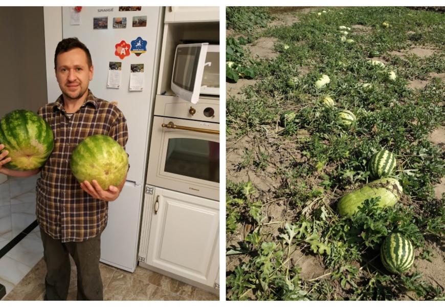 Alytaus rajono arbūzų augintojo derlius taps mokslinių tyrinėjimų objektu