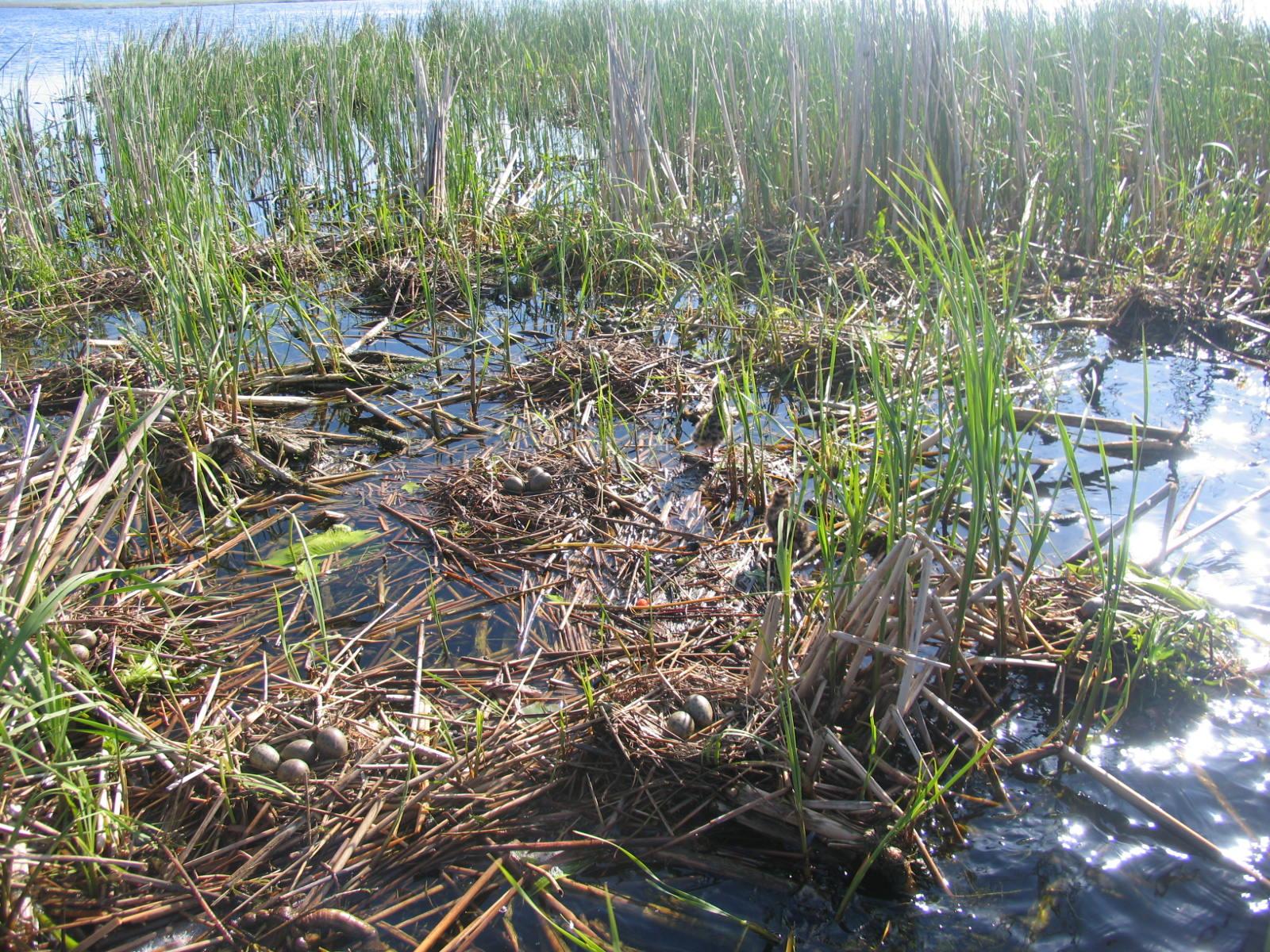 Žuvinto rezervatas atsinaujino: lankytojų centre – nauja ekspozicija ir įrengtas gamtinis takas 2