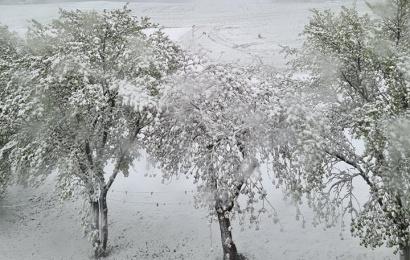 """Gamtininkas ramina: """"Iškritęs gegužės sniegas derliui žalos nepadarys"""""""