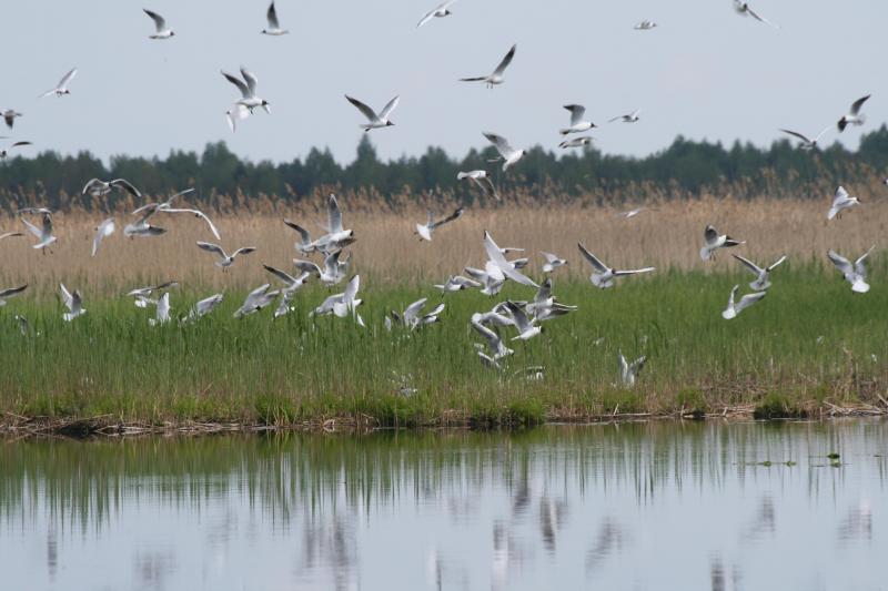 Žuvinto biosferos rezervate – lankytojų centras su unikaliu gamtos pasauliu ir pažintiniu taku 2