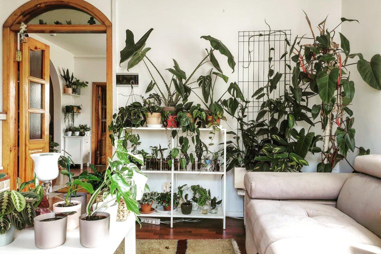 Alytuje apsigyvenusi filipinietė svajoja įkurti botanikos sodą 5