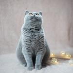 """""""Instagram"""" žvaigžde tapusi alytiškės katė skanėstams užsidirba pati 4"""
