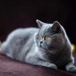 """""""Instagram"""" žvaigžde tapusi alytiškės katė skanėstams užsidirba pati 5"""