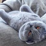 """""""Instagram"""" žvaigžde tapusi alytiškės katė skanėstams užsidirba pati 6"""