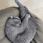 """""""Instagram"""" žvaigžde tapusi alytiškės katė skanėstams užsidirba pati 7"""