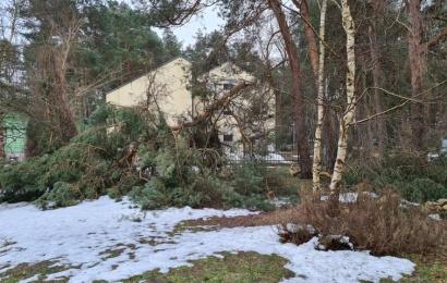 Po sniego pasiutpolkės miškų tvarkymo darbai gali nusitęsti iki rudens