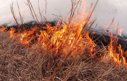 Ugniagesiai įspėja: pernykštės žolės deginimas pavojingas gamtai ir žmonėms
