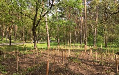 Alytaus miesto Kurorto parke pasodinta virš 1000 naujų medelių