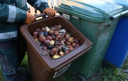 Maisto atliekos: mesti, išvežti ar kompostuoti?