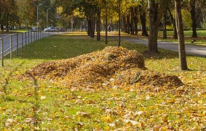 Nepamirškite pasirūpinti lapais savo kiemuose ir daugiabučių bendrijose